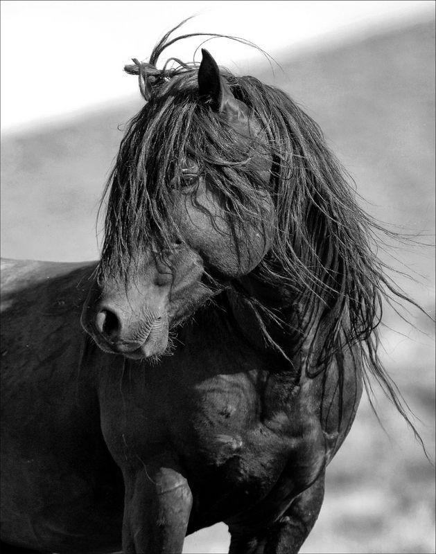 Untamed spirit wild stallion